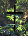 A cross and plant