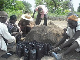 Men preparing the bags in which moringa seedlings will be grown Courtesy of Zakari Baraou