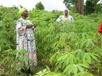 women in field in cameroon