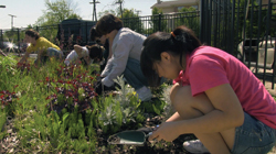 picture of families working in a community garden