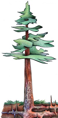 tree illustration left side