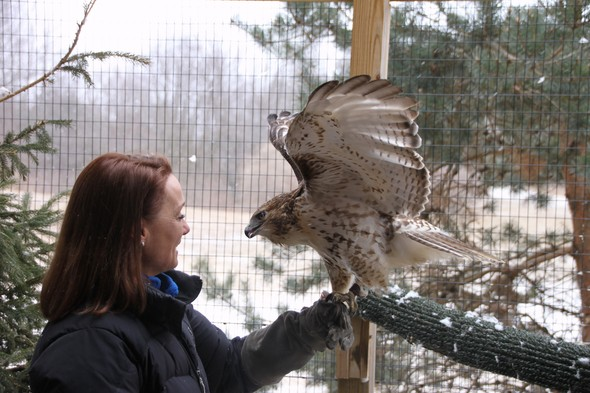 Rufous the Red-Tailed Hawk and Dana DeBenham