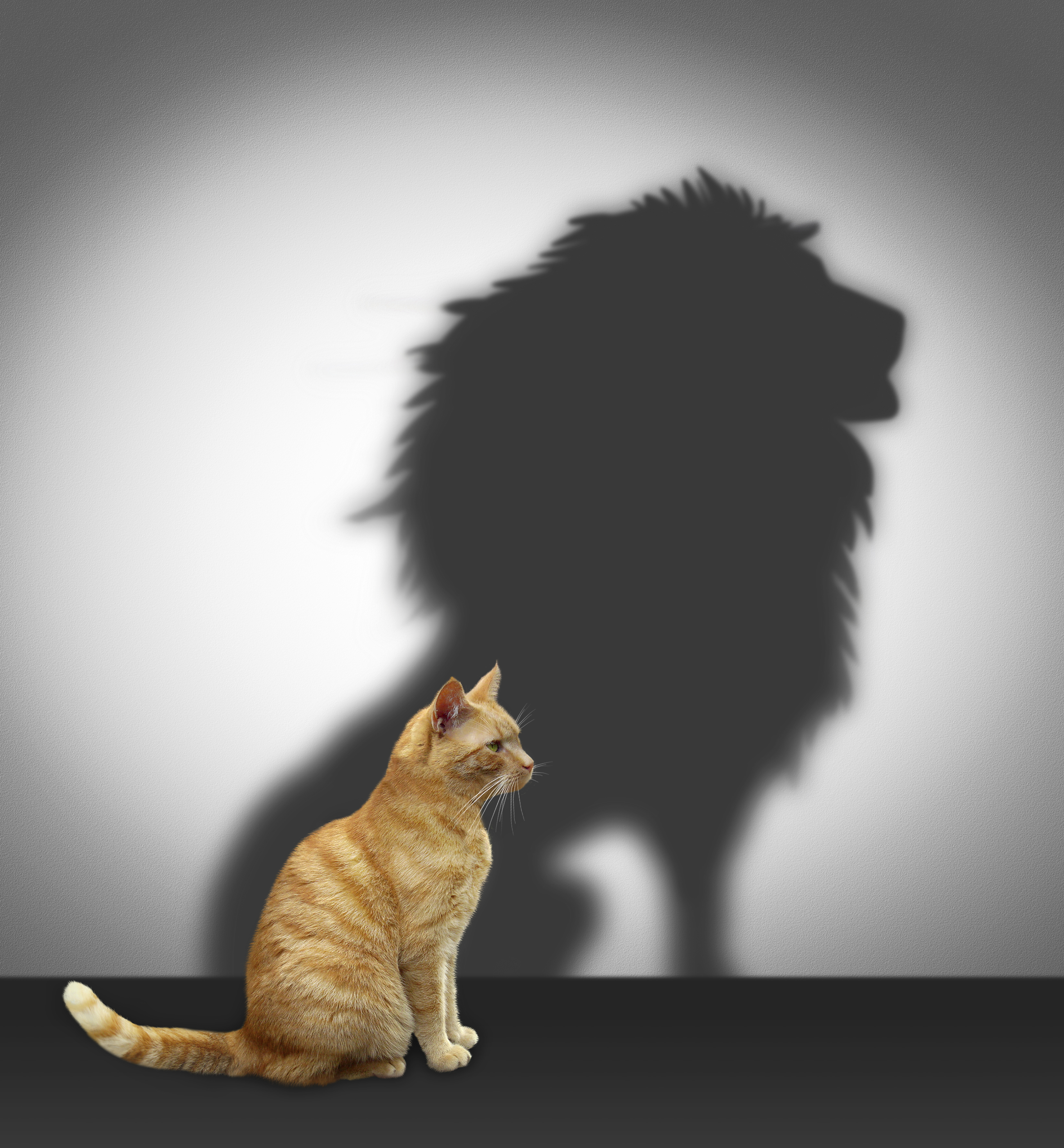 Cat stands tall and shadow forms a lion